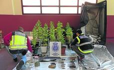 En libertad las dos detenidas en Palencia con plantas de marihuana, un revólver y 25 armas blancas