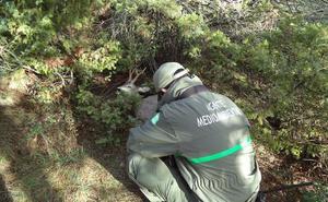 Sorprendidos 'in fraganti' tras cazar corzos y no haberlos precintado