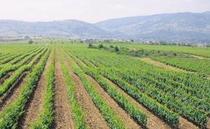 La DO Bierzo acude a Alimentaria, su quinto destino en lo que va de año
