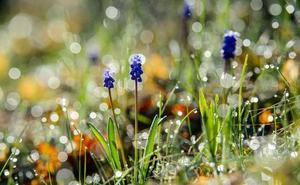 Envíanos tus fotos más primaverales