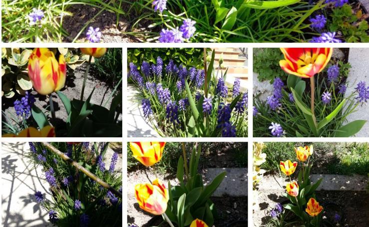 Las fotos más primaverales enviadas por los lectores de El Norte de Castilla