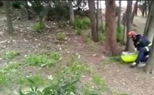Los Bomberos de Valladolid devuelven a tres patos perdidos con su madre