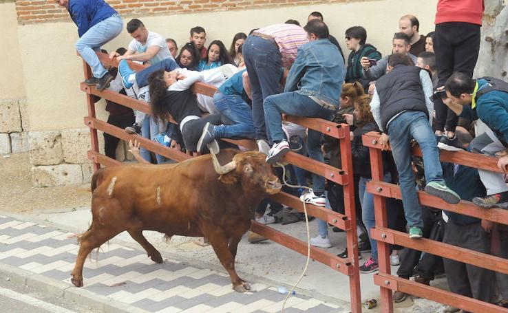 En el Toro del Sarmiento de La Seca resultan heridas tres mujeres