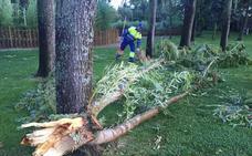 El Ayuntamiento repondrá 180 árboles dañados en 80 calles