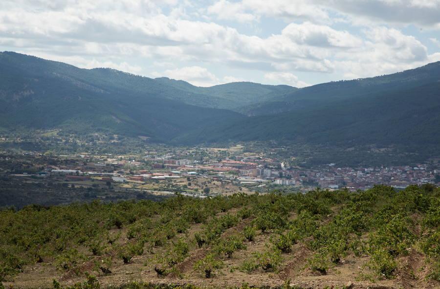 200 viticultores forman ya parte de la DOP Vino de Cebreros, que «fija los cimientos» con un Programa de Dinamización