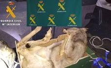 Hallan un corzo muerto en el maletero de un coche en el norte de Palencia