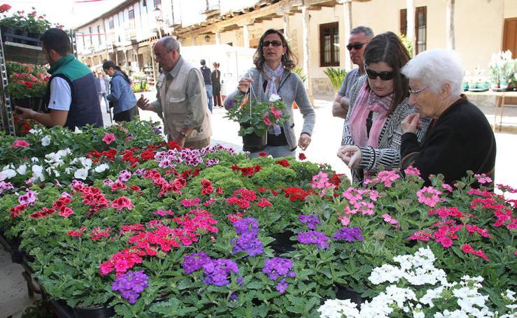El aroma floral invade Ampudia