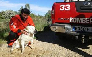 Los bomberos rescatan a un perro y plantean denunciar a su dueño por no evitar que escapara