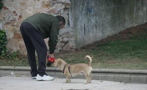 El Ayuntamiento repartirá 80.000 bolsas de recogida de heces de animales