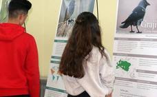El barrio de Pajarillos de Valladolid inaugura una muestra sobre aves amenazadas