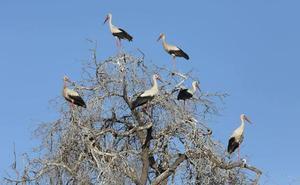 Ornitocyl, primer encuentro nacional en Castilla y León para los amantes de las aves