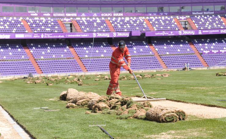 El césped de Zorrilla, listo para el partido contra el Barça