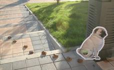 Arroyo actualiza la ordenanza reguladora de animales domésticos