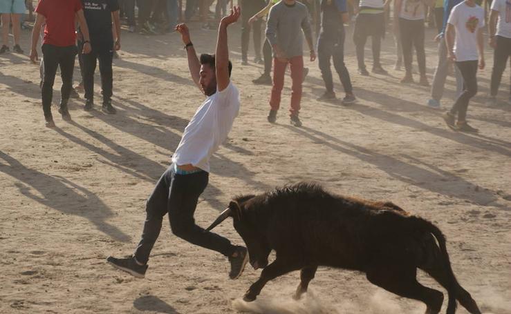 Fiestas Arroyo. Suelta de vaquillas