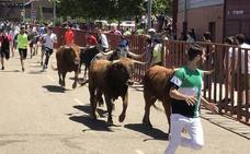 Encierros en La Flecha fiestas de San Antonio