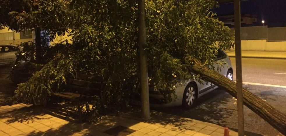 Sótanos inundados y un árbol caído sobre la calzada incidentes reseñables tras la tormenta sobre Arroyo