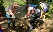Varios voluntarios limpian de desperdicios la ribera del río Pisuerga en Arroyo