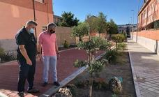 El Ayuntamiento de Arroyo desarrolla un plan de remozado de jardinería en calles, rotondas y medianas del municipio