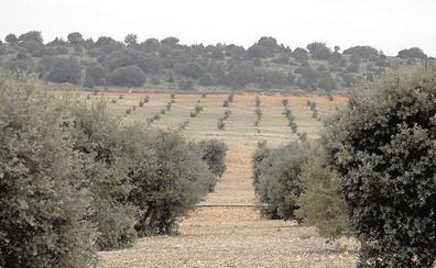 La Diputación aprueba la concesión de 20 ayudas para el cultivo de la trufa negra