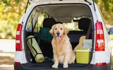¿Vacaciones? No sin tu perro