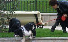 Un plan de choque combatirá los excrementos de mascotas en la calle