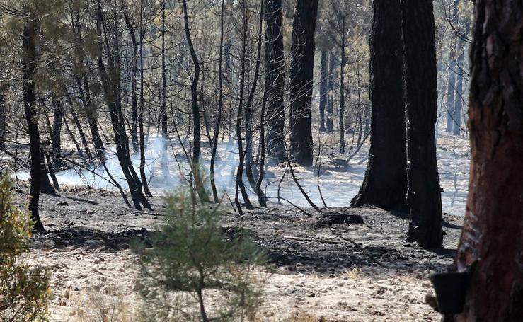 Incendio en Navalilla (Segovia)