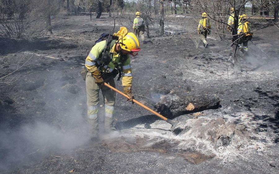 Los pinares quemados en Navalilla necesitarán 30 años para recuperarse