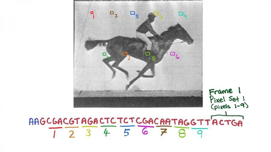 Científicos de Harvard codifican ADN bacteriano con imágenes en movimiento