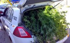 Detenidos dos ancianos en Ciudad Real por traficar con marihuana