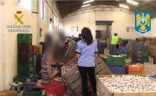 Hallan a 59 inmigrantes en Cuenca en condiciones infrahumanas trabajando en la campaña del ajo