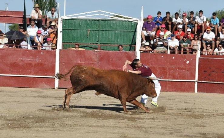 Concurso de Cortes en Aldeamayor de San Martín