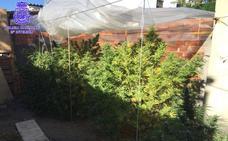 Tres detenidos tras desmantelar dos plantaciones de marihuana