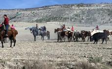 Solo dos novillos del encierro campero de Vallelado entran en el recorrido urbano