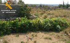 Incautan 90 kilos de marihuana en varios pueblos de Ávila