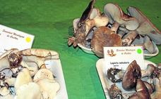 La Asociación Micológica y Botánica Ribera del Malucas organiza un nuevo curso de micología