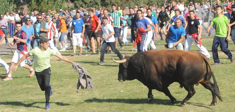 Una asociación animalista denuncia el «encierro ilegal» del Toro de la Vega