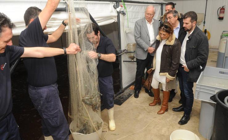Tudanca visita la empresa Gamba Natural de Medina del Campo