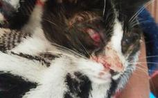 Ocho gatos mueren envenenados en Barruelo