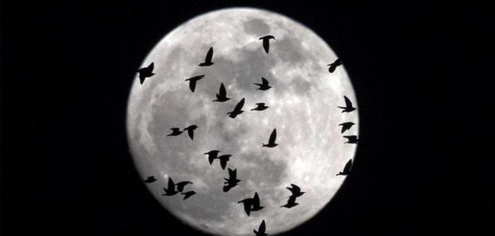 Esta noche se podrá ver la 'superluna azul de sangre'