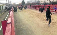 Viana cierra sus fiestas de invierno con el último toro de San Blas