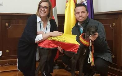 Palencia rinde homenaje a Malú, la campeona del Nacional de Galgos