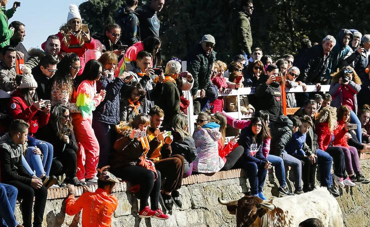 Sábado en el Carnaval del Toro de Ciudad Rodrigo