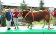 La ganadería abulense 'Candeleílla', galardonada con cuatro premios internacionales
