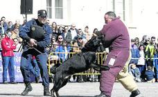 Los perros guardianes exhiben sus habilidades en Palencia