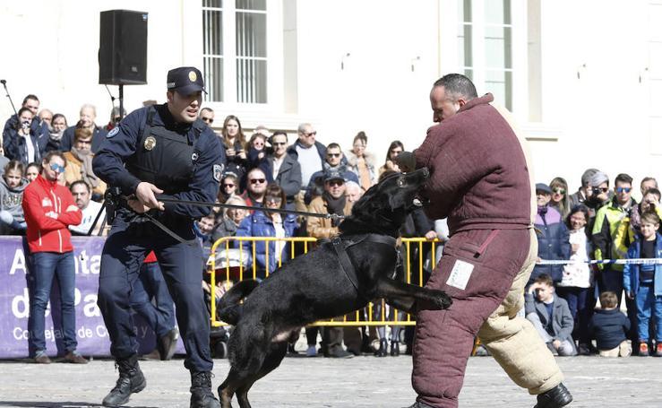 Exhibición canina de la Policía Local de Burgos