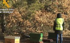 Investigados dos hermanos de la Valdavia por el robo de 58 colmenas