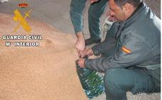 Investigan a ocho personas en Palencia por el uso fraudulento de semillas de cereal