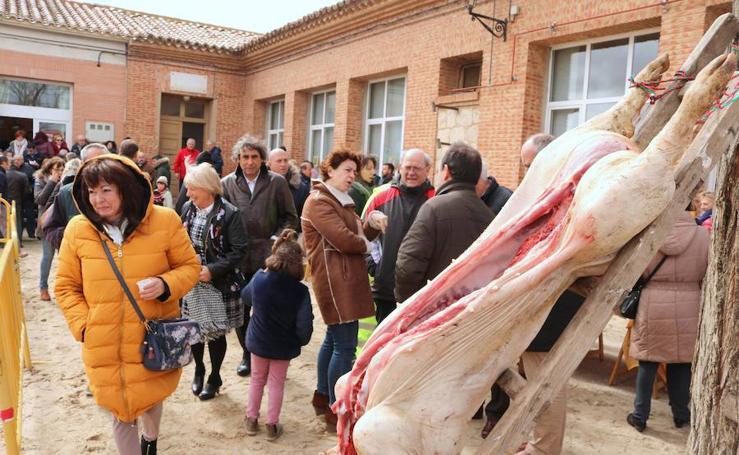 Jornada de la matanza del cerdo en Baños de Cerrato