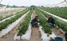 El sector hortícola aglutina el 80% del empleo en la comarca del Carracillo
