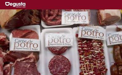 Cinco beneficios de la carne de potro